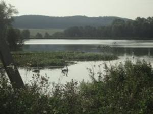 Пруд на реке Асавка